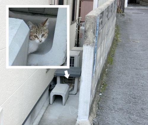 ネコ発見ッ!!! 子猫ですよ。