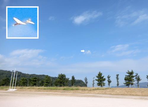 キュムラス、飛んでるトコ!その1。