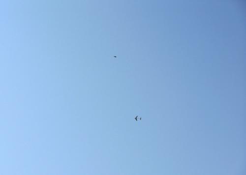 自由機、練習中。その2!