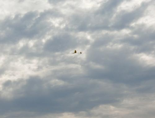 ニンバス2000、飛んでるトコ~! その2!