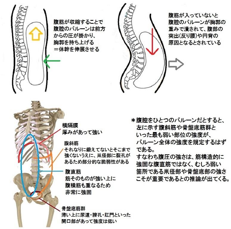 腹圧システム 図