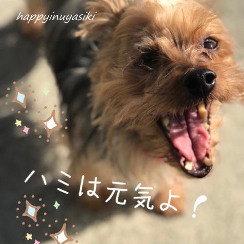 mini2017IMG_6065.jpg