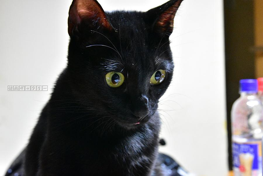 171115_cat.jpg