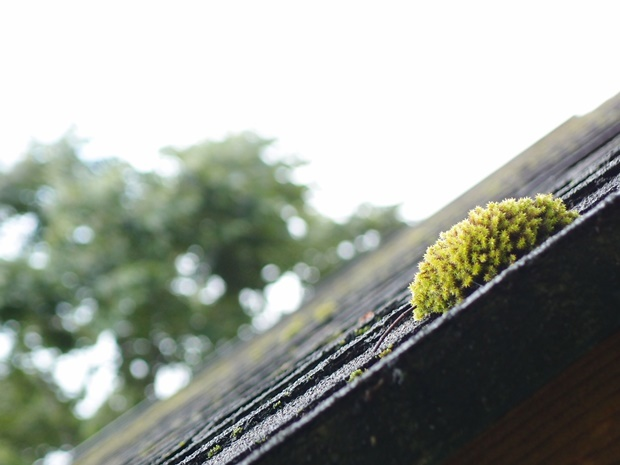 屋根の上の苔