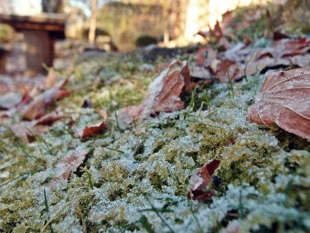 11月の初雪で落ち葉と苔の上にうっすら降った雪