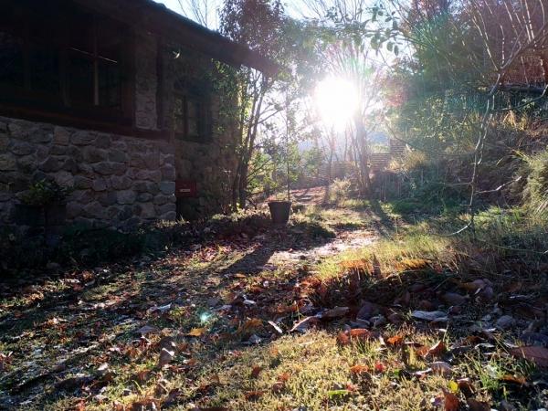 逆光に光る庭