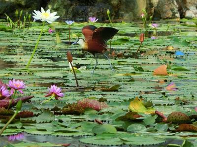 掛川花鳥園お池と鳥
