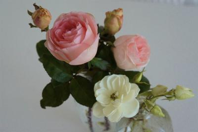 今年最後の薔薇のつぼみ