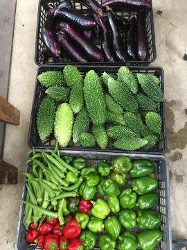 野菜収穫とマックス3