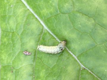 虫捕り、種蒔き2