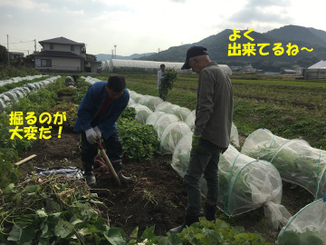 農園玉ねぎニンニク植え2
