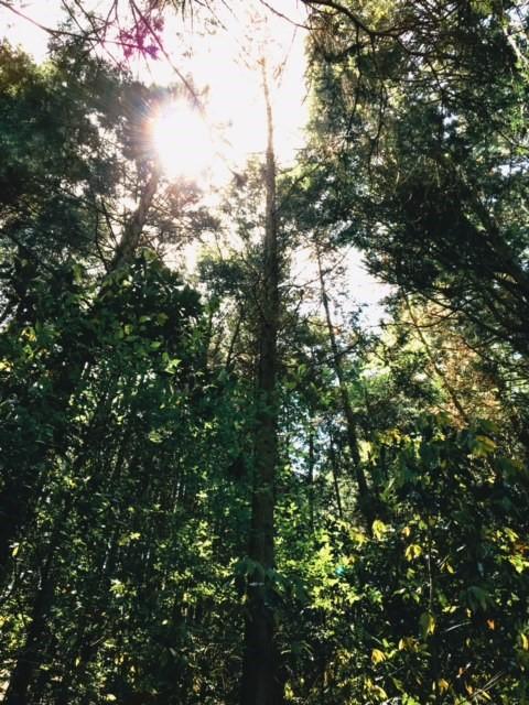 kuma4.jpg