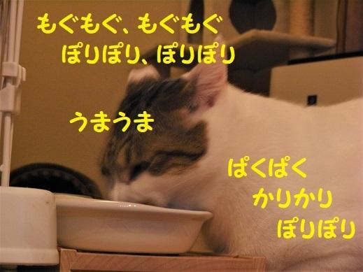 RIMG0471.jpg