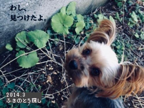 fc2blog_201810160647196ac.jpg