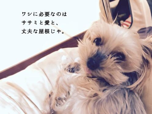 fc2blog_20181112130035148.jpg
