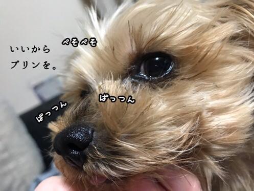 fc2blog_20181112203926f33.jpg