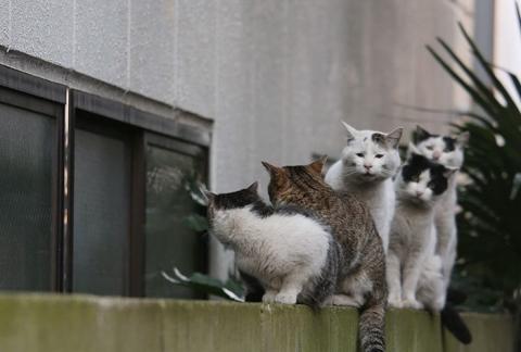 tokyo-stray-cat-photography-busanyan-masayuki-oki-japan-a25-57616a39efdd9__700.jpg