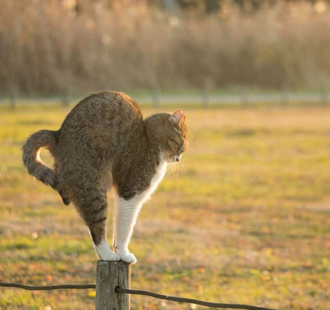 tokyo-stray-cat-photography-busanyan-masayuki-oki-japan-a4-576169f36613f__700.jpg