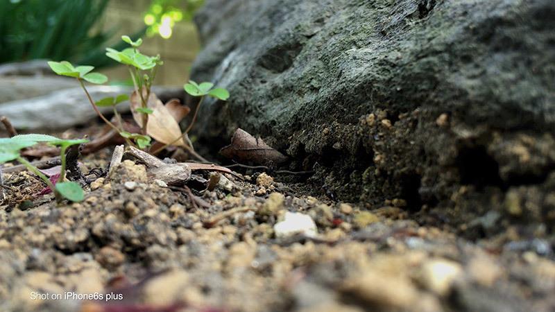 蟻の観察_3_s
