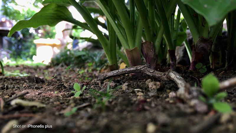 蟻の観察_6_s