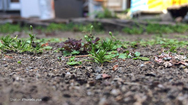 蟻の観察_8_s
