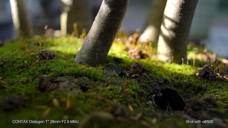 蟻の観察_11_s