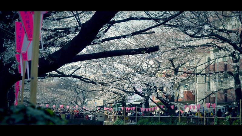 目黒川桜まつり_7_s