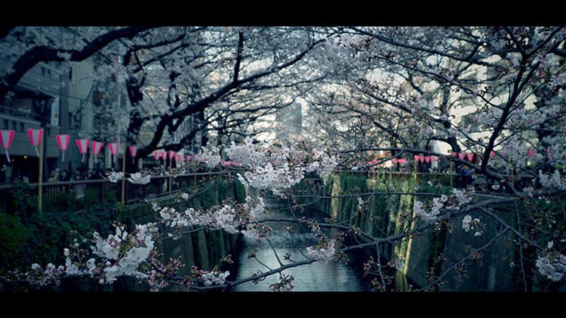 目黒川桜まつり_10_s