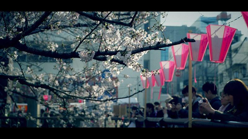 目黒川桜まつり_12_s