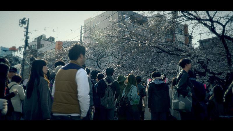 目黒川桜まつり_13_s