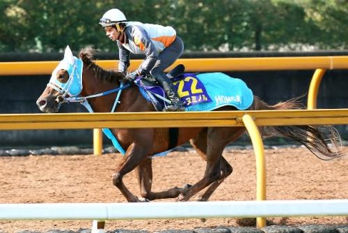 【マイルCS】和田竜二騎手レーヌミノルでマイルCSを勝ってモズカッチャンの最優秀3歳牝馬阻止へ