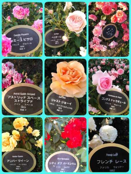 17-05-22-20-43-26-571_deco_20170522205442.jpg