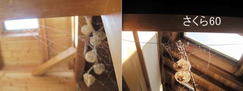 20171105汚部屋の掃除クモの巣