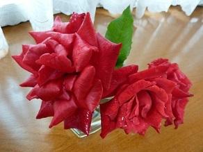 今度はちゃんと話しておかないといけないなと思っています。 それと、雨に打たれた赤いバラ。