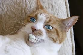 ラウラ入れ歯