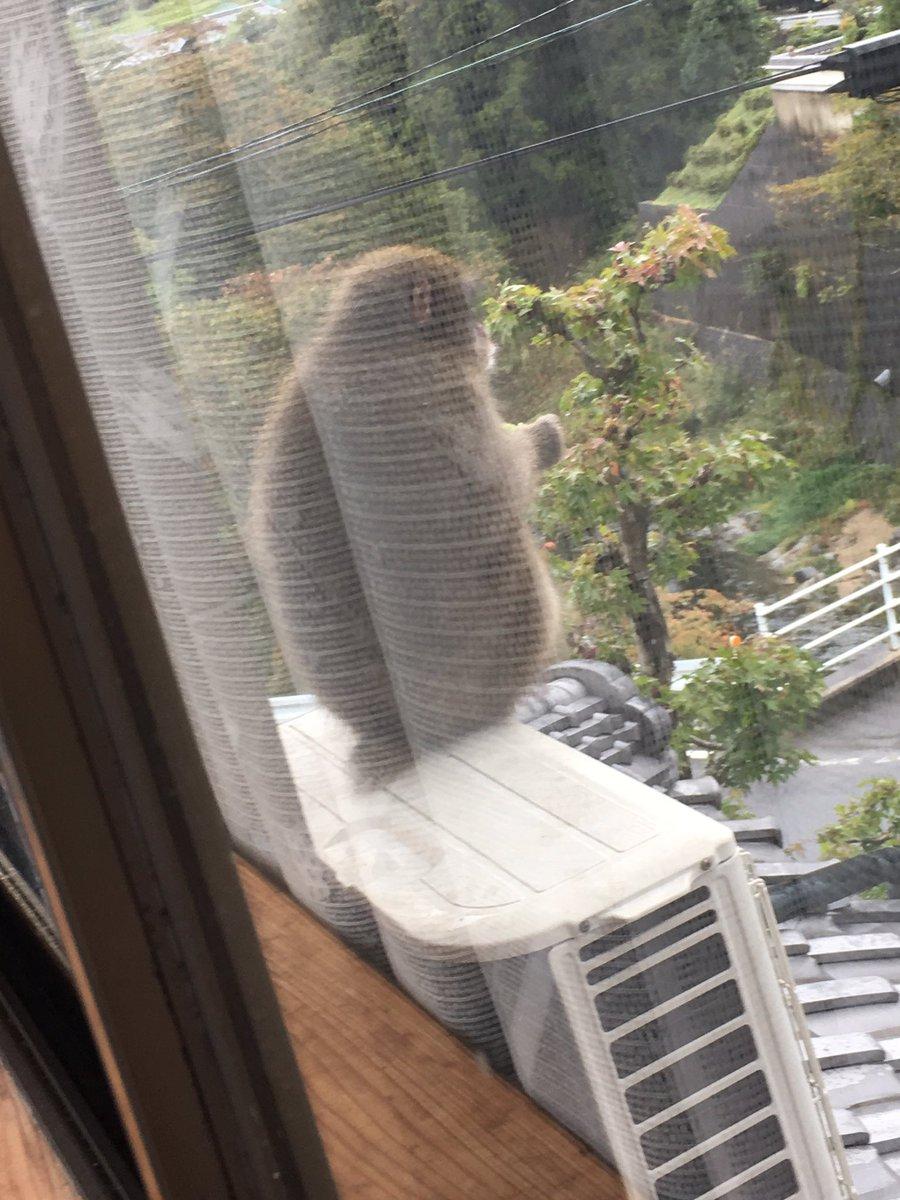 窓の外のデュカさん