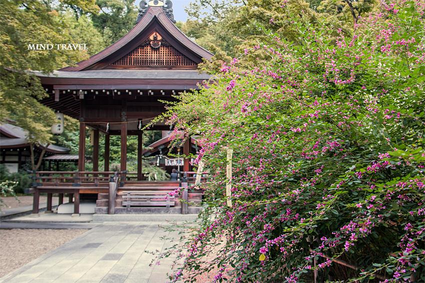 梨木神社 萩5