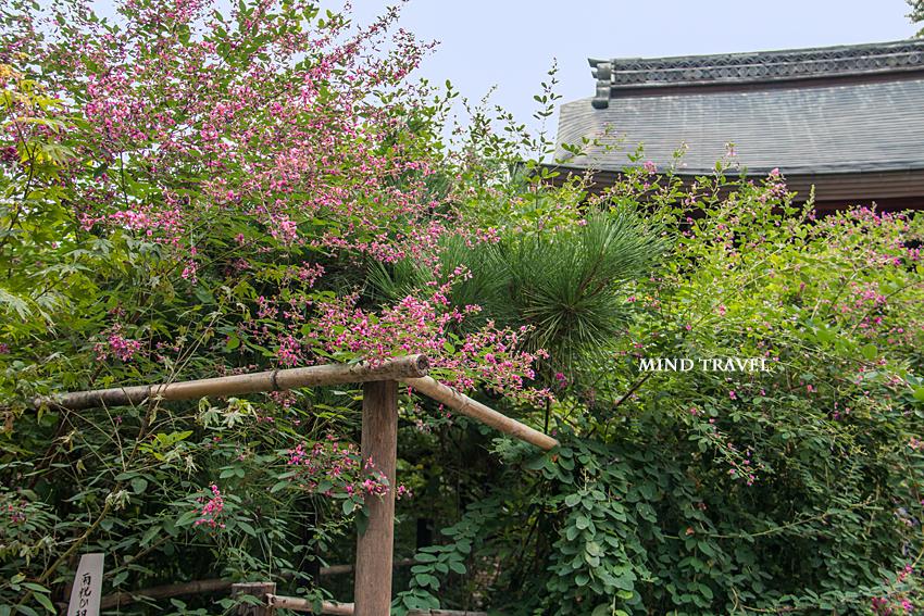 梨木神社 萩4