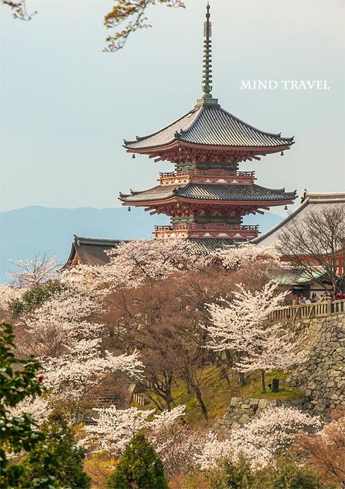 清水寺 三重塔 桜