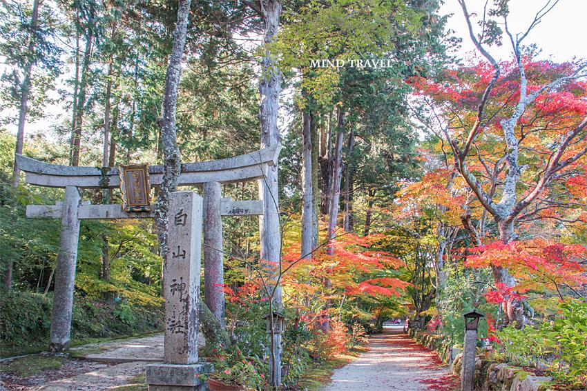 長寿寺 白山神社 鳥居