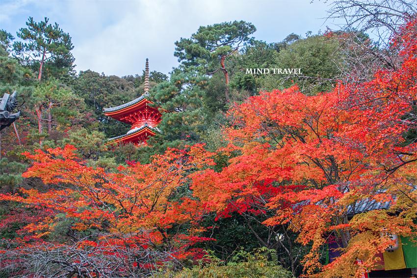 今熊野観音寺 多宝塔