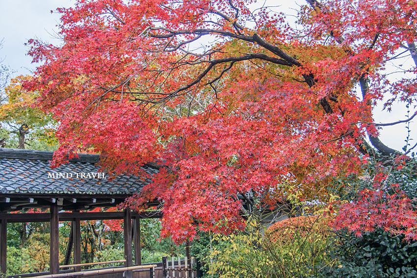 天龍寺 回廊 紅葉