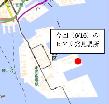 20170618神戸市ヒアリ発見場所