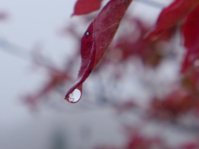 B20171030_紅葉3_雨_P1180067