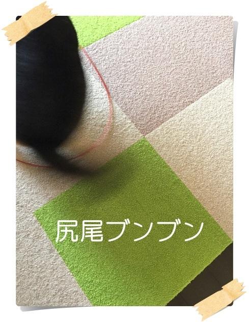 komaro20170927_6.jpg