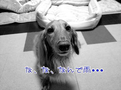 17-11-04-20-54-31-026_deco.jpg