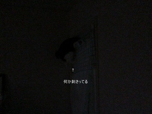 IMG_3197 2017 7 (426)