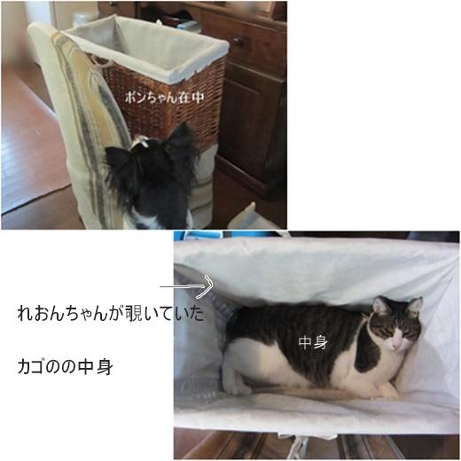 cats1_20171113193354a22.jpg
