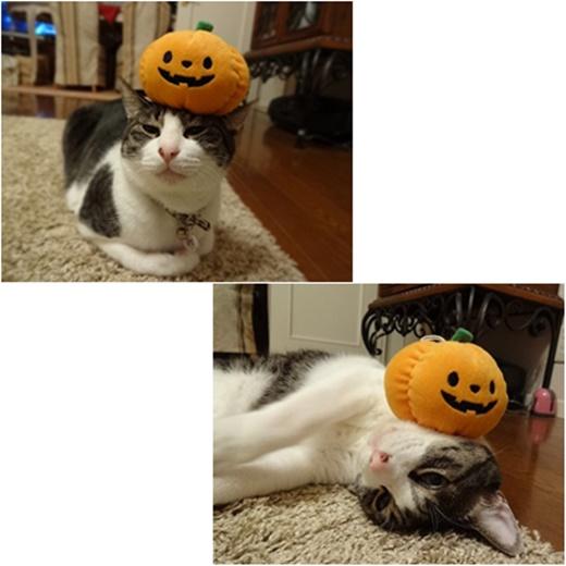 cats_201710102123561b9.jpg