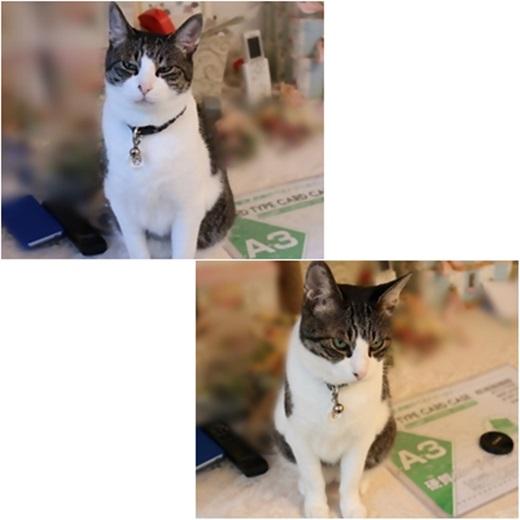 cats_20171021210832dda.jpg